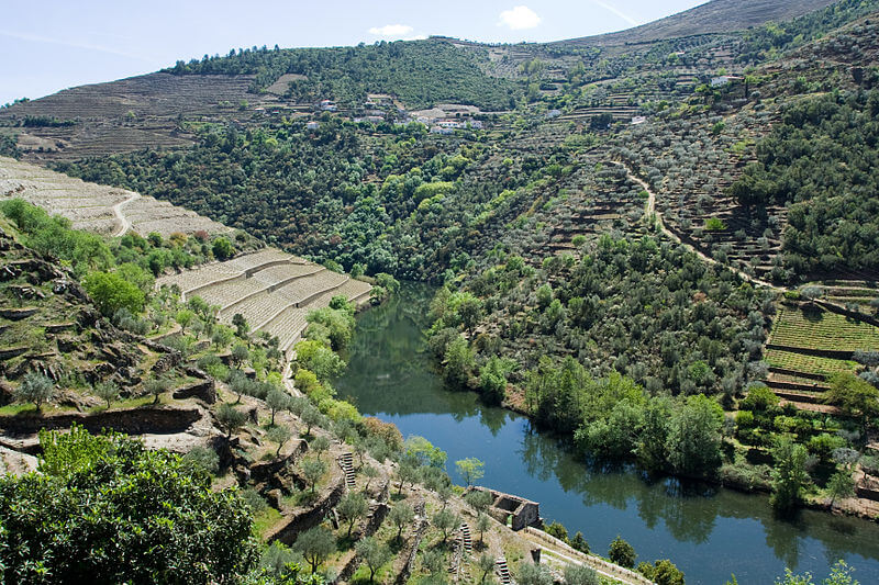 Douro Valley at Home Wet Bar