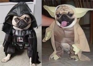 star-wars-dog-costume